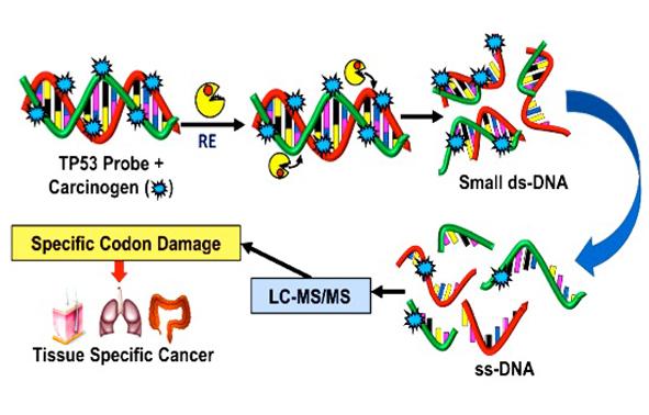 UPLC-MS screening of gene damage
